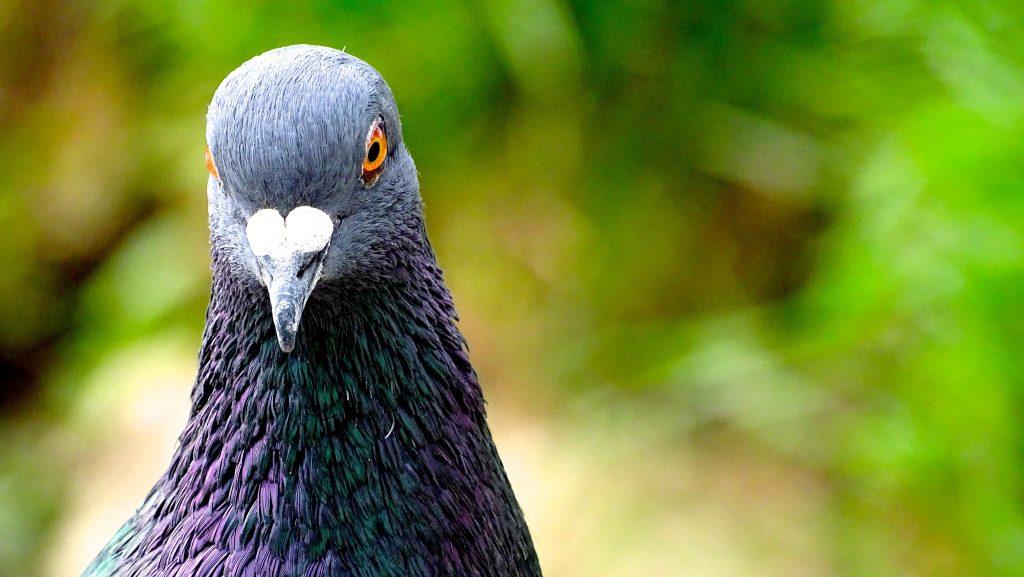 Plaga palomas aves comunidad de propietarios